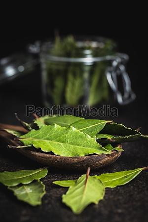 frische gruene lorbeerblaetter
