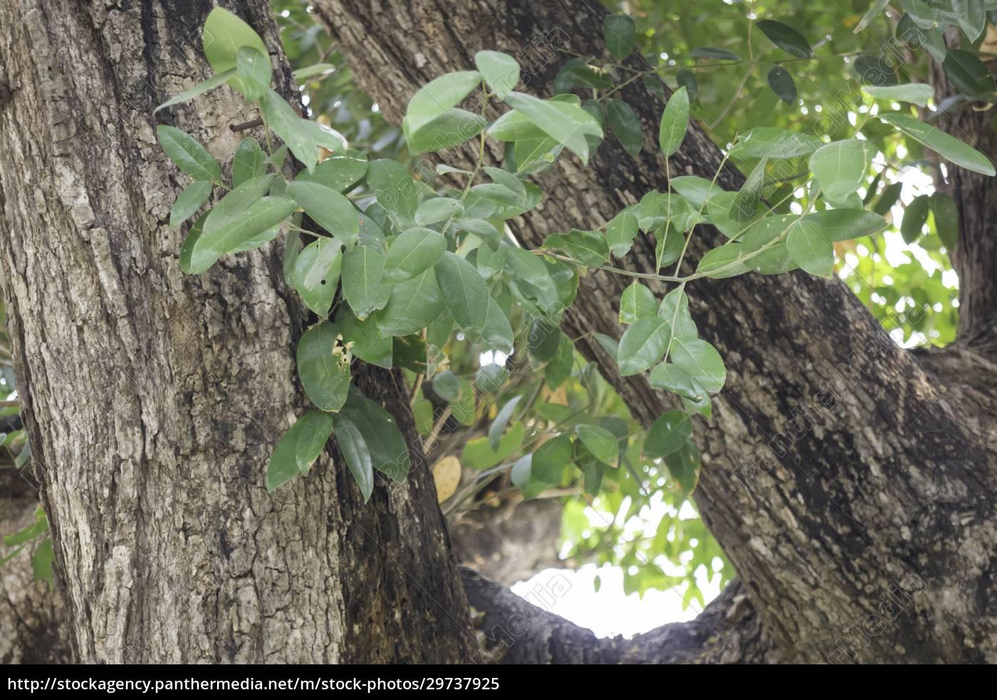 varieties, tropical, rainforest, foliage, plants - 29737925
