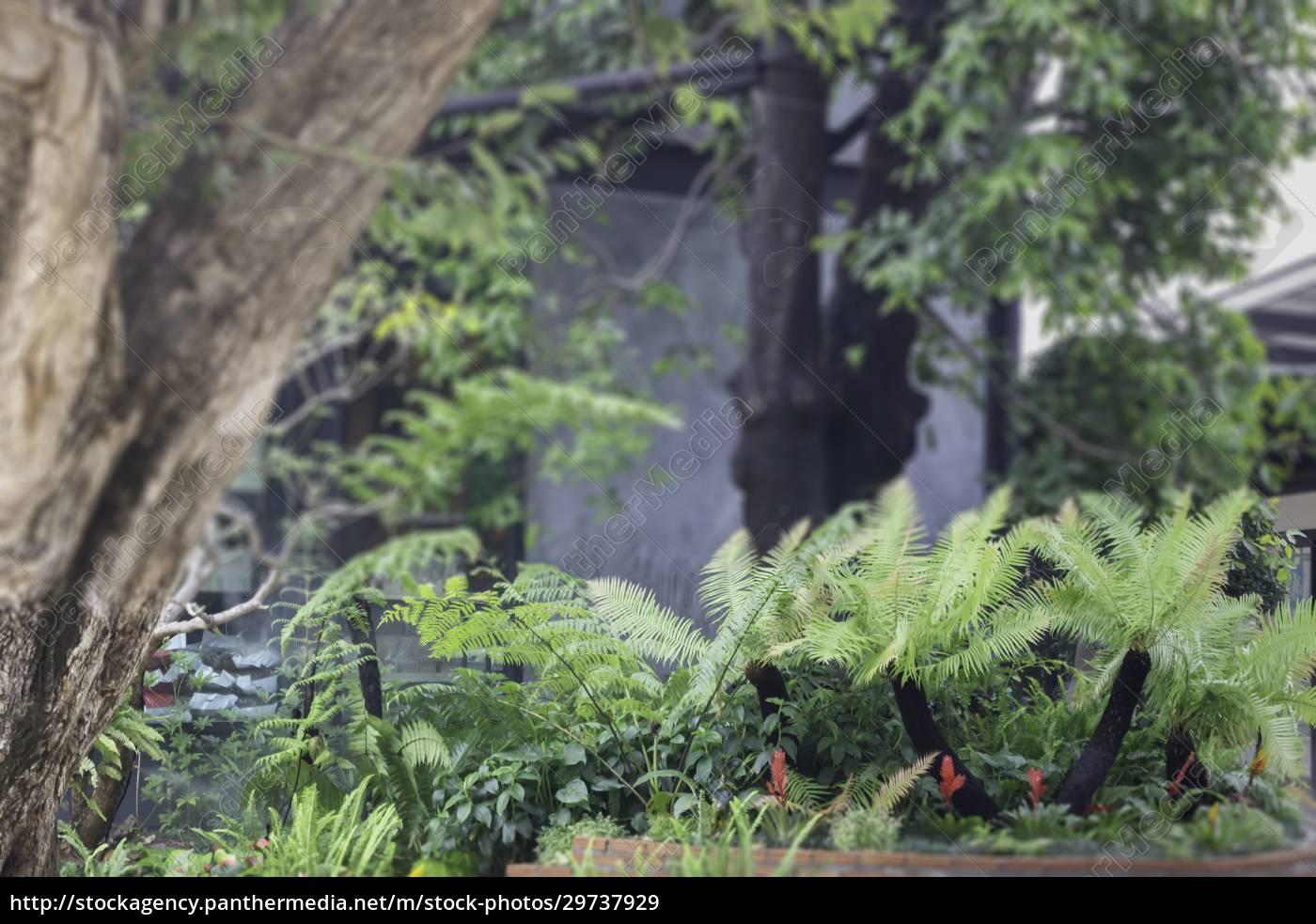 varieties, tropical, rainforest, foliage, plants - 29737929