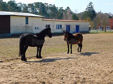 pferde, im, fahrerlager, in, der, uckermark - 29761642
