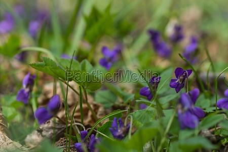 blume sommer sonnenblume kraeuter pflanzen fruehling