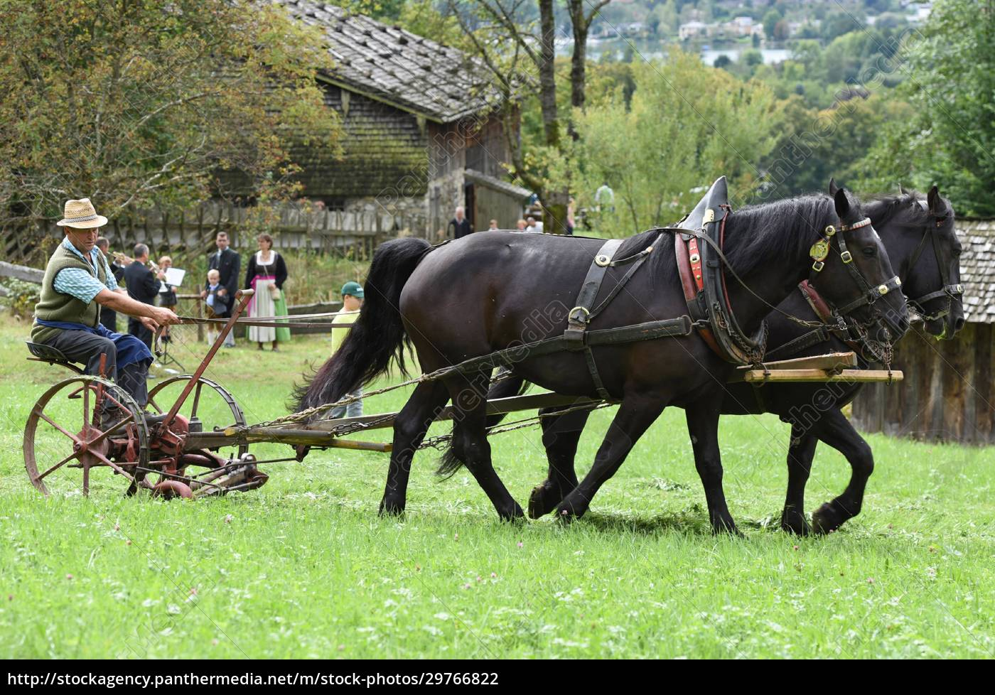 ein, pferdegespann, mit, einem, historischen, pflug - 29766822