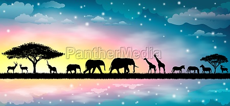 savannah, animals, 1 - 29768859