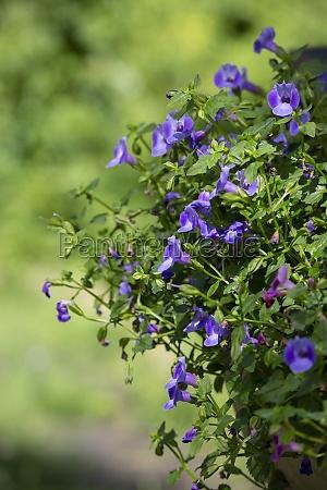 purple, flowers - 29770515