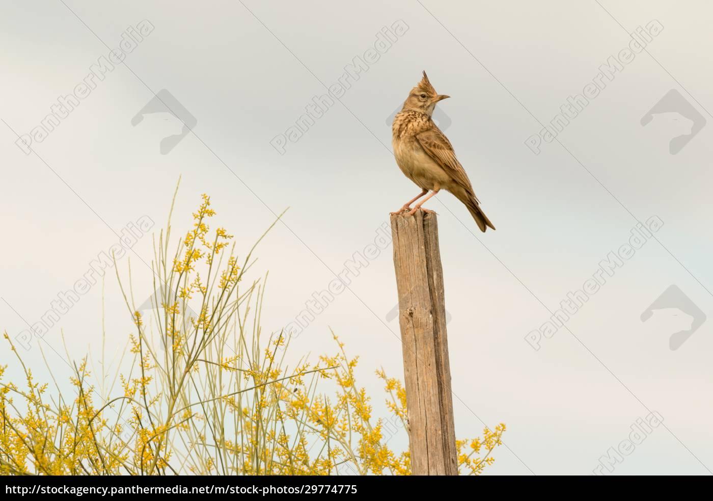 beautiful, bird, on, a, stick - 29774775