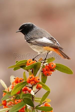 pretty, bird, with, a, nice, orange - 29778913