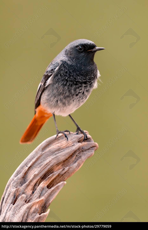 small, bird, on, a, trunk - 29779059