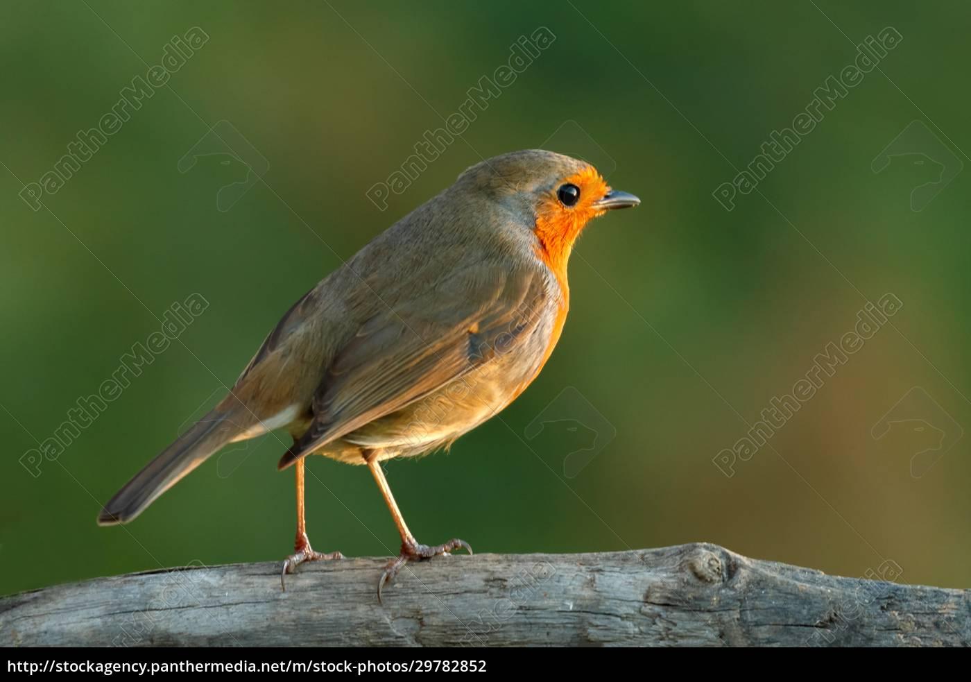 pretty, bird, with, a, nice, orange - 29782852