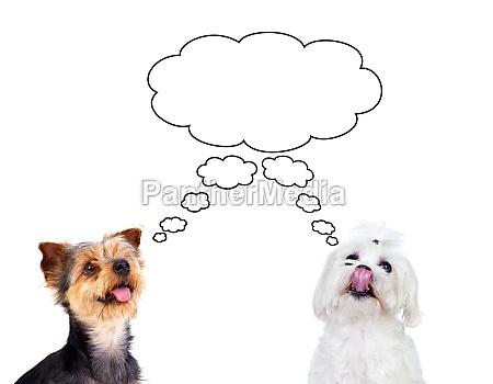 nette kleine hunde denken