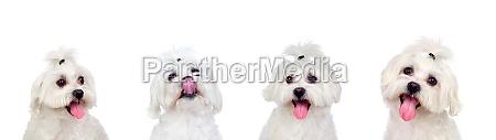 vier gleichberechtigte hunde