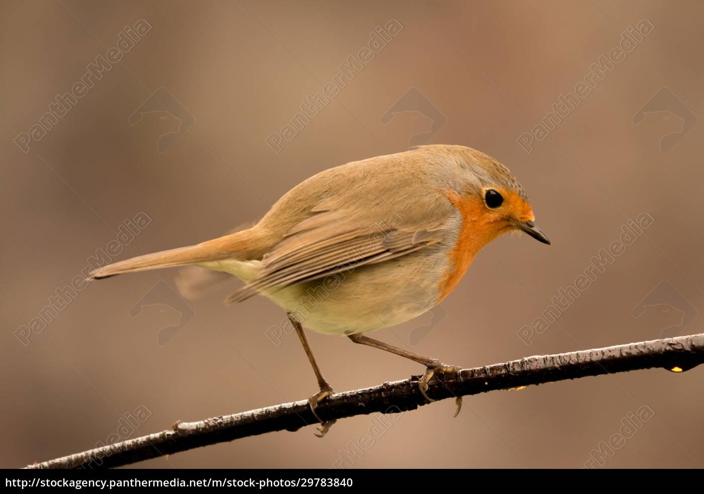 pretty, bird, with, a, nice, orange - 29783840