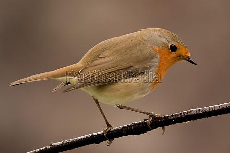 pretty, bird, with, a, nice, orange - 29783841