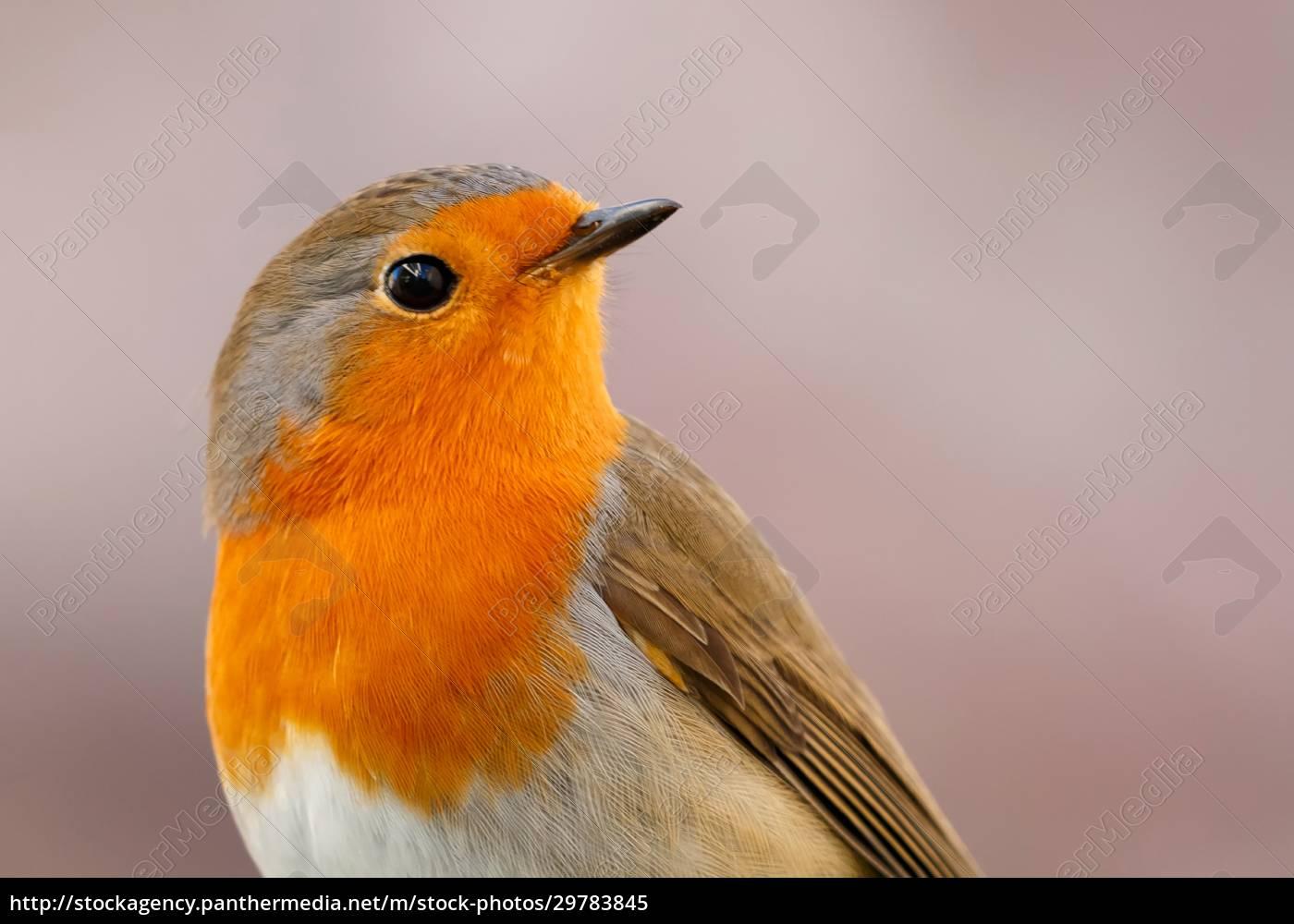 pretty, bird, with, a, nice, orange - 29783845