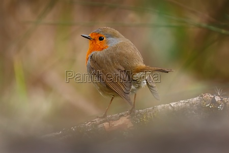 pretty, bird, with, a, nice, orange - 29783849