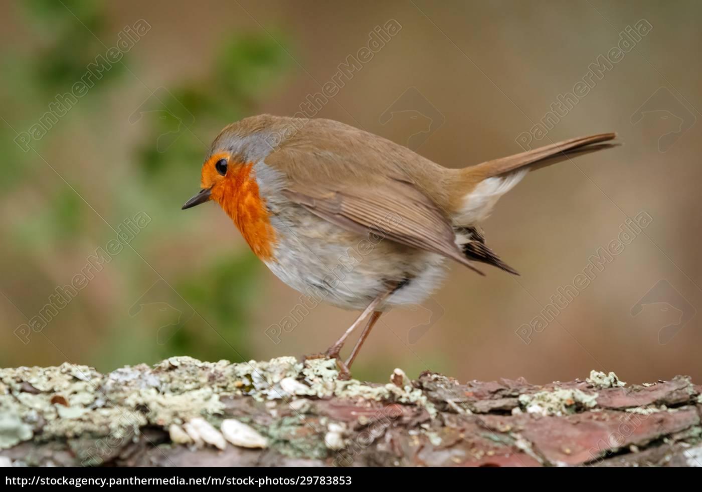 pretty, bird, with, a, nice, orange - 29783853