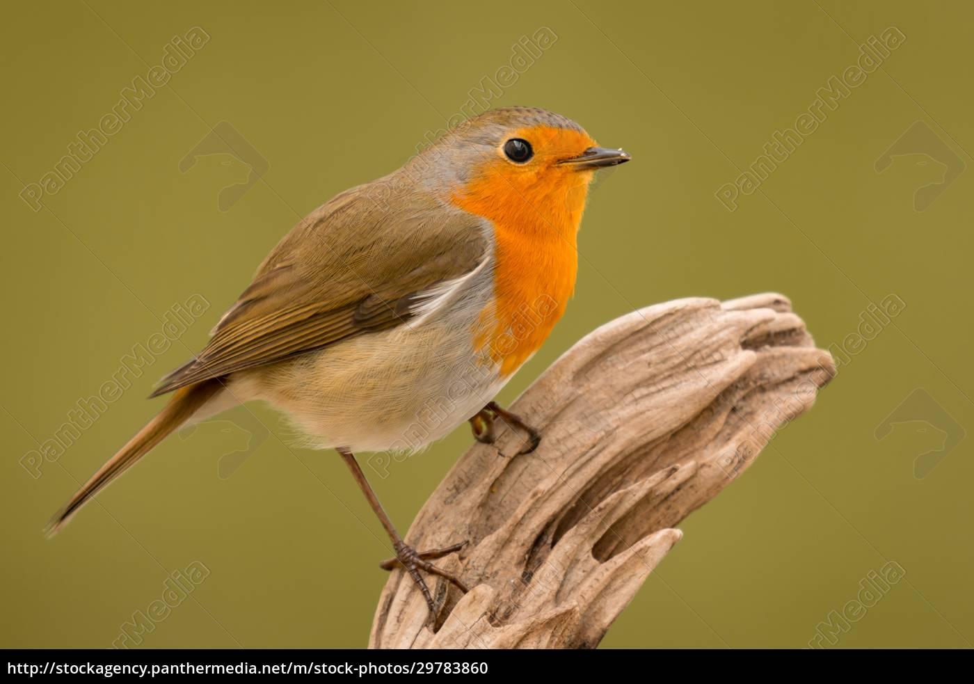pretty, bird, with, a, nice, orange - 29783860