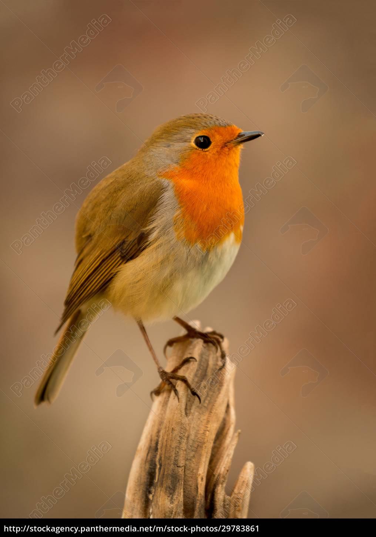 pretty, bird, with, a, nice, orange - 29783861