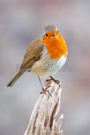 pretty, bird, with, a, nice, orange - 29783957