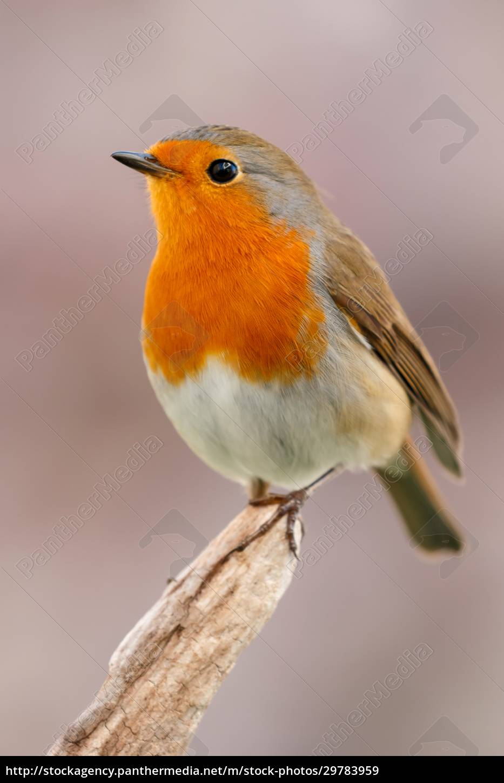 pretty, bird, with, a, nice, orange - 29783959