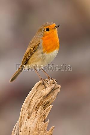pretty, bird, with, a, nice, orange - 29783964