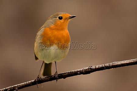 pretty, bird, with, a, nice, orange - 29783969