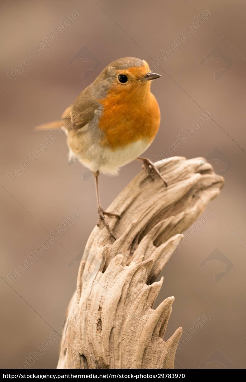 pretty, bird, with, a, nice, orange - 29783970