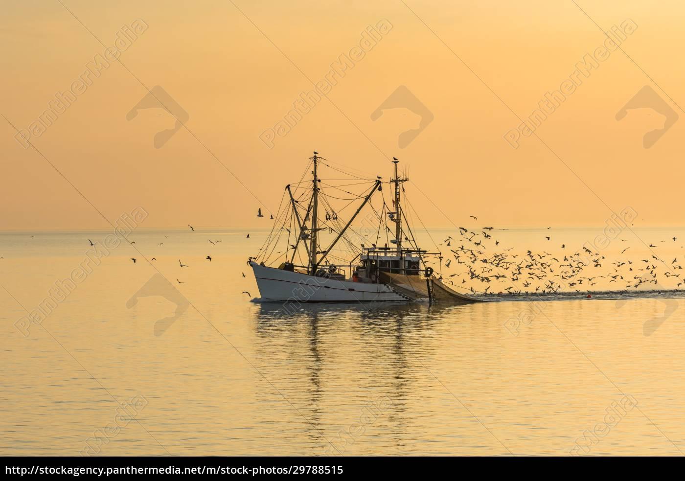 fishing, boat, , buesum, , north, sea, , schleswig-holstein, - 29788515