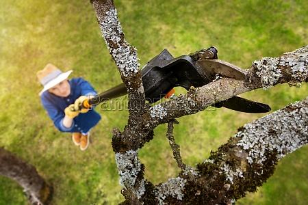 frau schneidet alten apfelbaumzweig mit teleskopbaumbeschnitt
