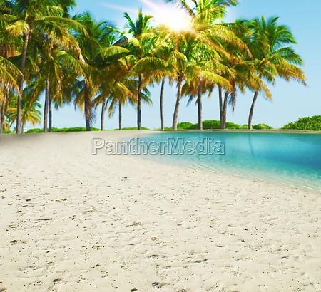 paradies tropischer strand