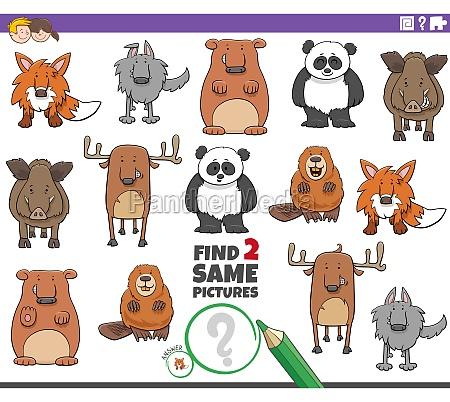 finden, sie, zwei, gleiche, cartoon, tiere - 29844916