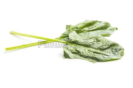 gruener spinatblaetter isoliert auf weissem hintergrund