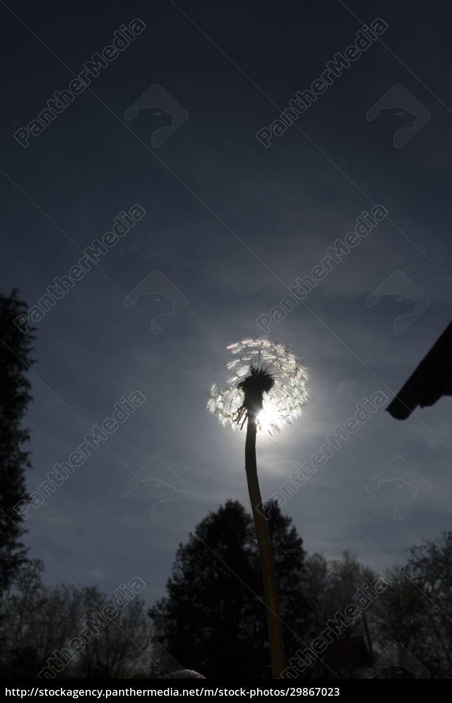 licht, als, lebenskraft, in, der, natur - 29867023