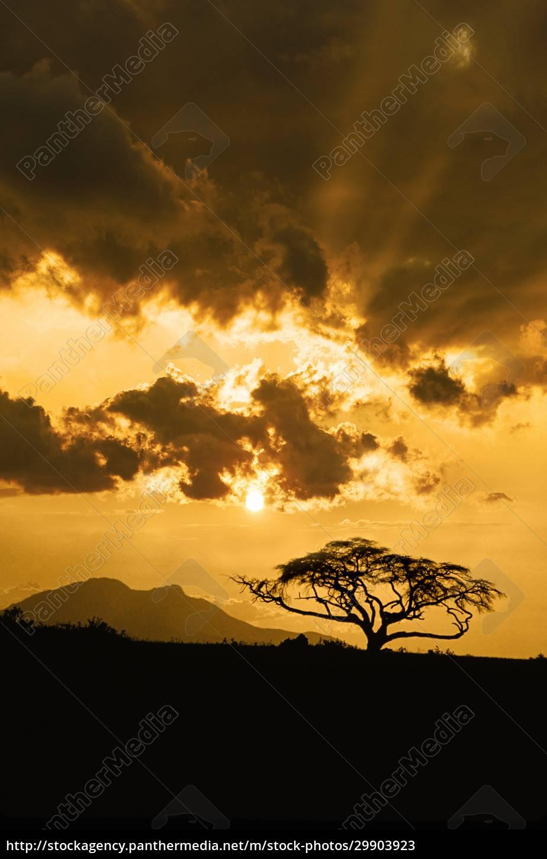 afrika, kenia, silhouette, des, akazienbaums, gegen, den, himmel - 29903923