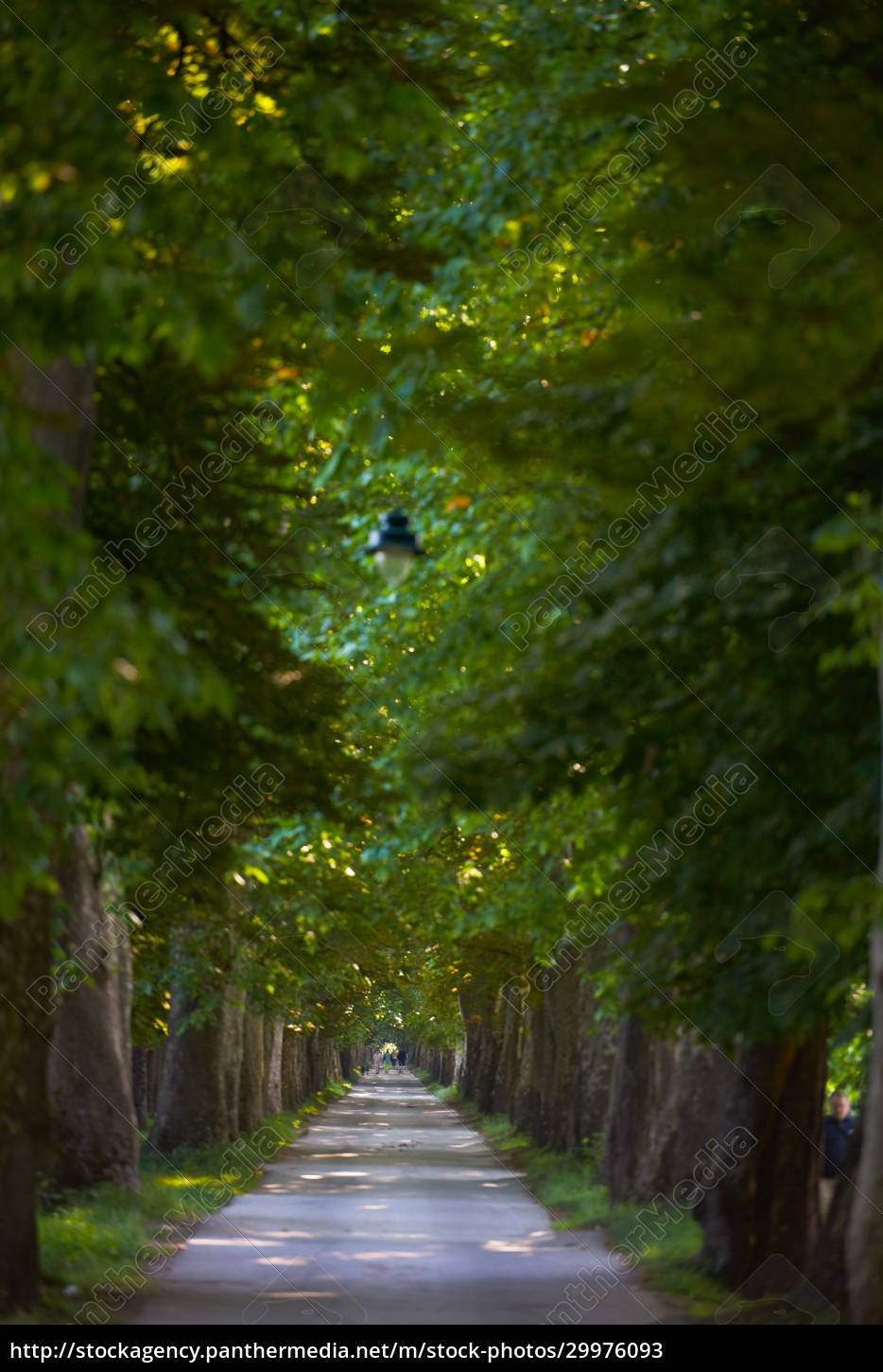country, road, trought, tree, , alley - 29976093