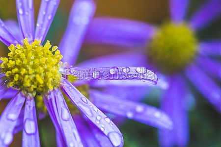 purple, flower, after, rain, , wallpaper:, macro - 30060143
