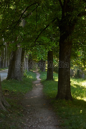 country, road, trought, tree, , alley - 30106324