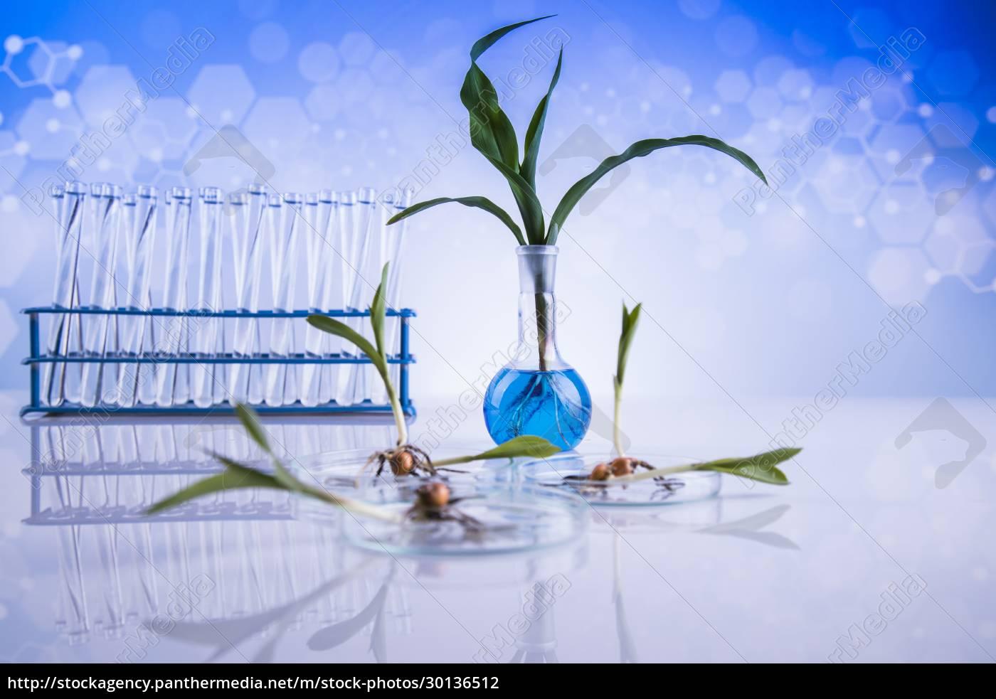 chemistry, equipment, , plants, laboratory, experimental - 30136512