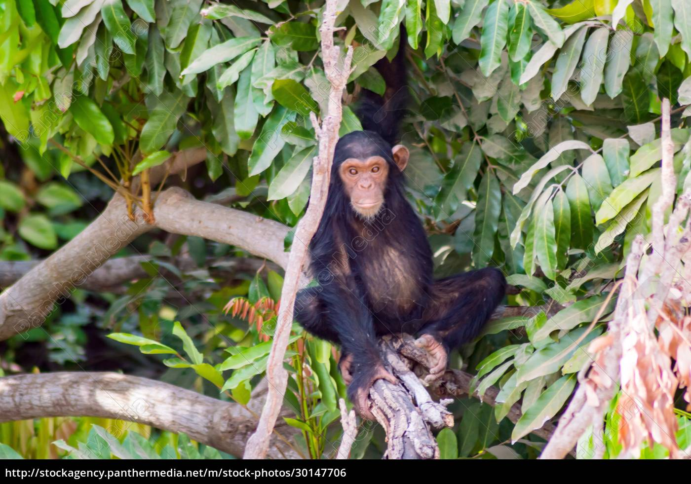africa, , gambia, , gambia, national, park, - 30147706