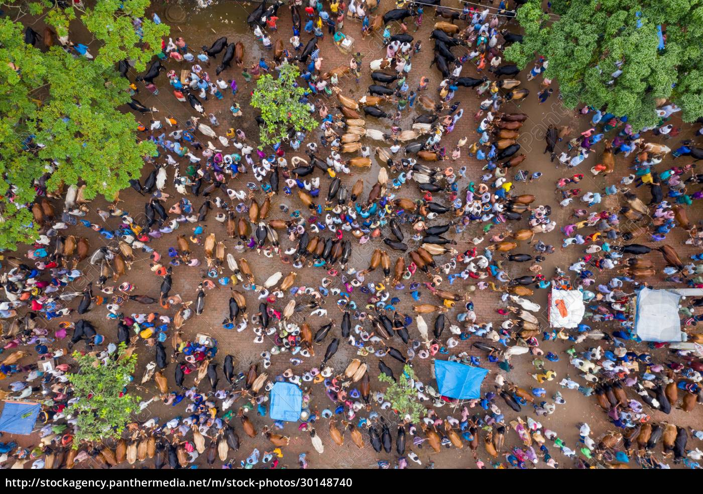aerial, view, of, people, feeding, animals - 30148740
