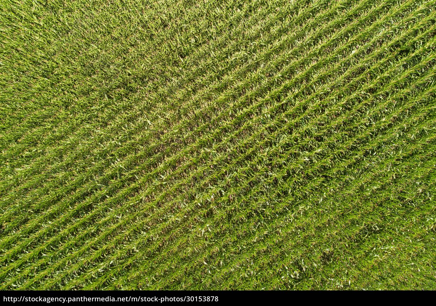 abstract, aerial, view, of, corn, field, - 30153878