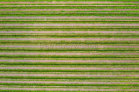 aerial, view, of, vineyard, and, the - 30153370