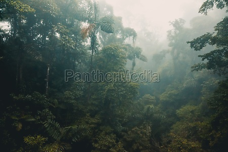 misty, rainforest, of, costa, rica - 30169796