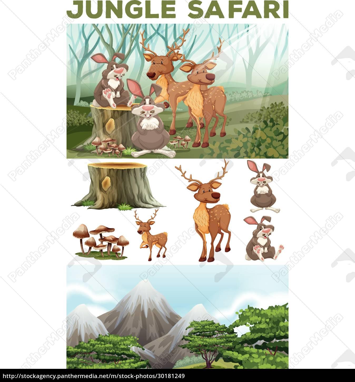 wild, animals, in, the, jungle, safari - 30181249