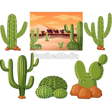 desert, field, with, cactus, plants - 30183238