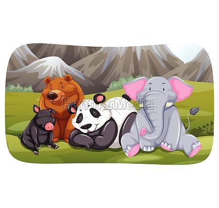 animals - 30189838
