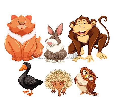 animals - 30192481