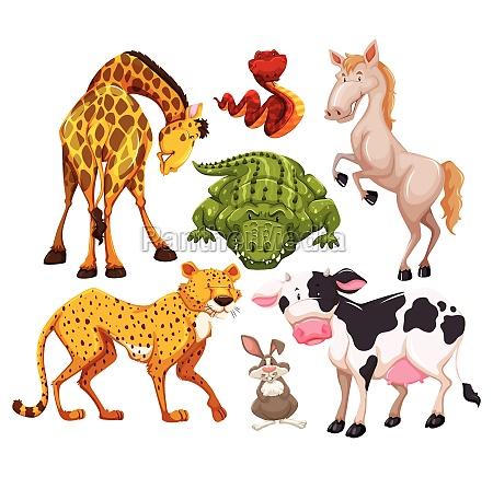 animals - 30194118
