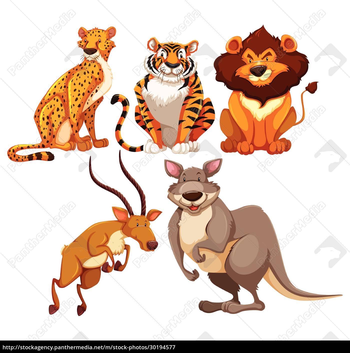 animals - 30194577