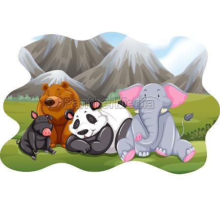 animals - 30203299