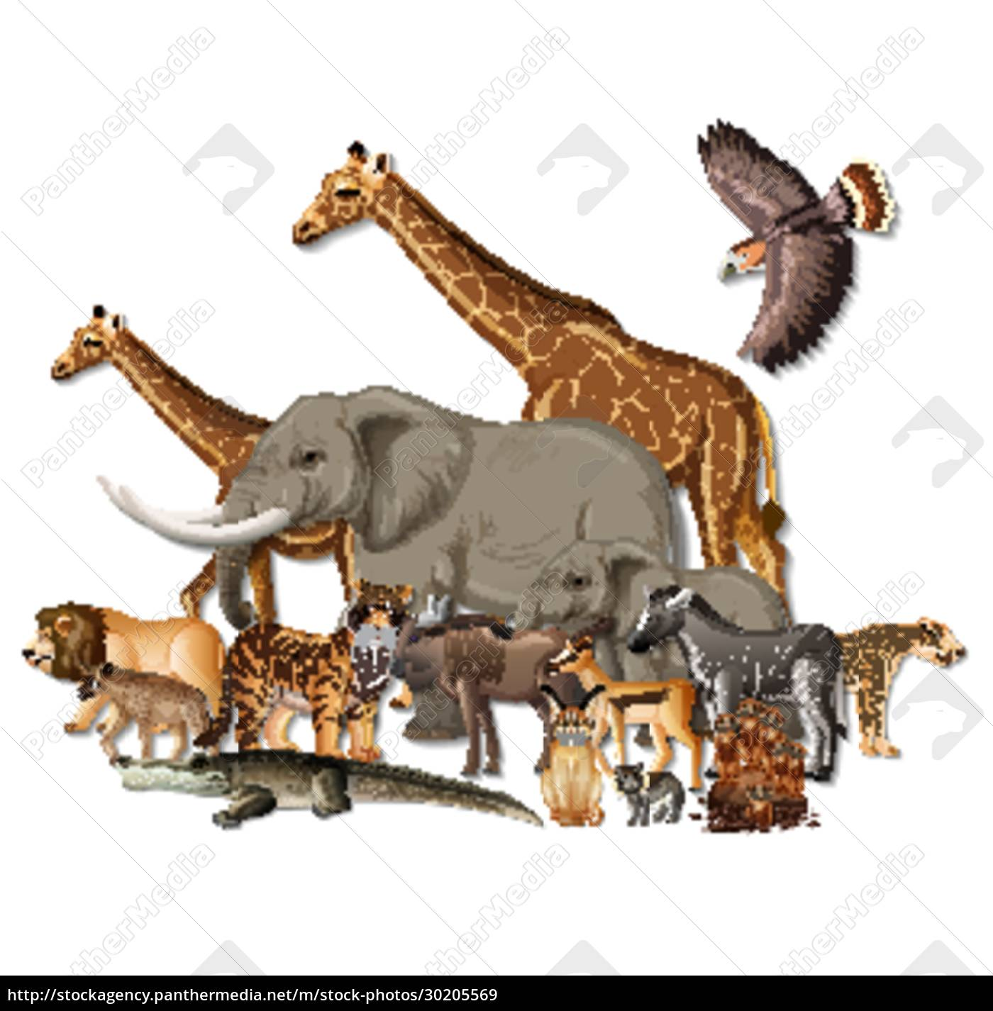 group, of, wild, african, animals, on - 30205569